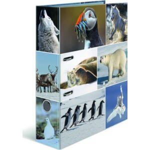 Iratrendező 70mm Herma Animal A4-es emelőkaros kihúzólyukkal ellátott Sark vidéken élő állatok mintával 7204